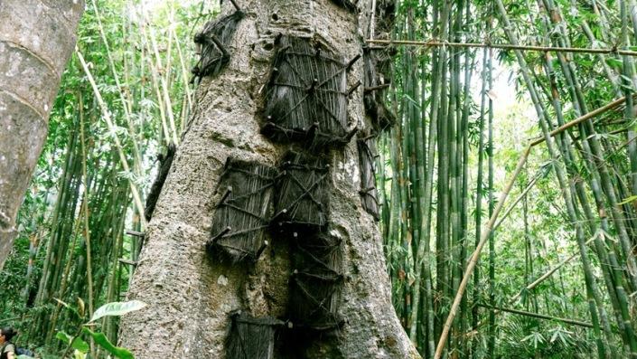 terrifying baby tree