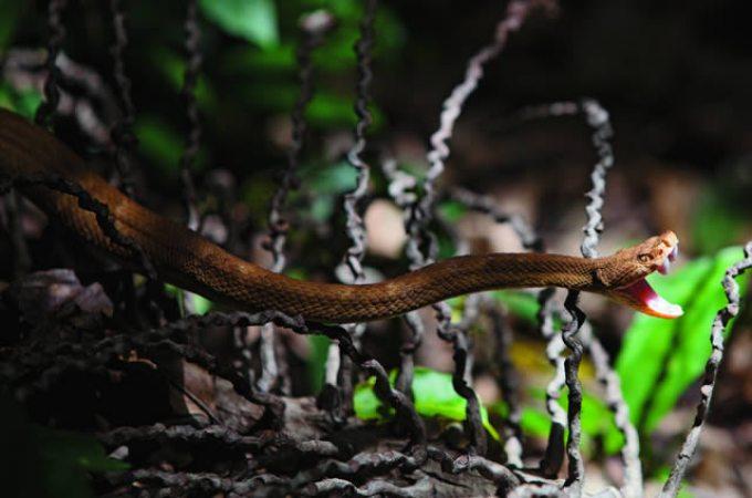 Terrifying snake isaldn_joao marcos rosa