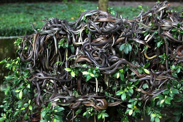 terrifying snake island in brazil_youtube
